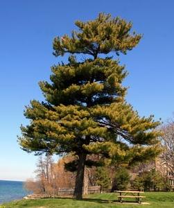 strong company tree